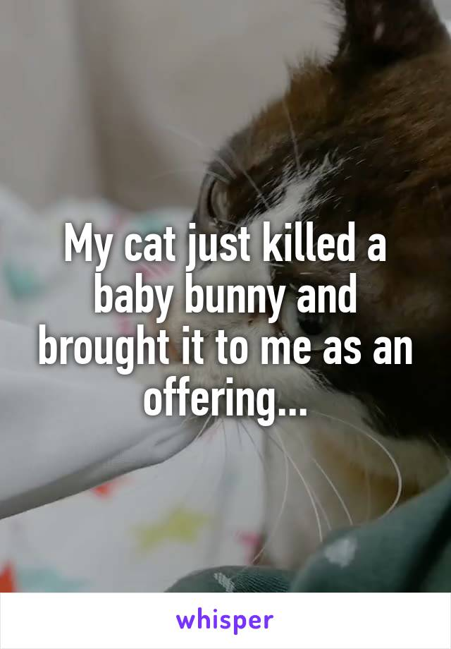 My cat just killed a baby bunny and brought it to me as an offering...