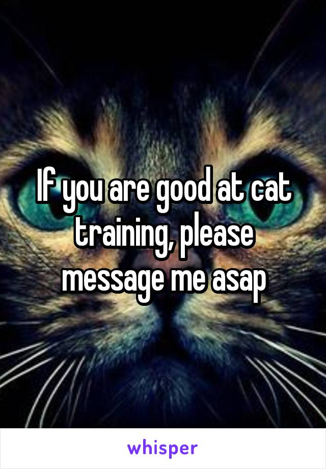 If you are good at cat training, please message me asap