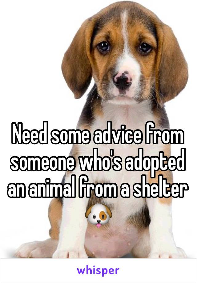 Need some advice from someone who's adopted an animal from a shelter 🐶
