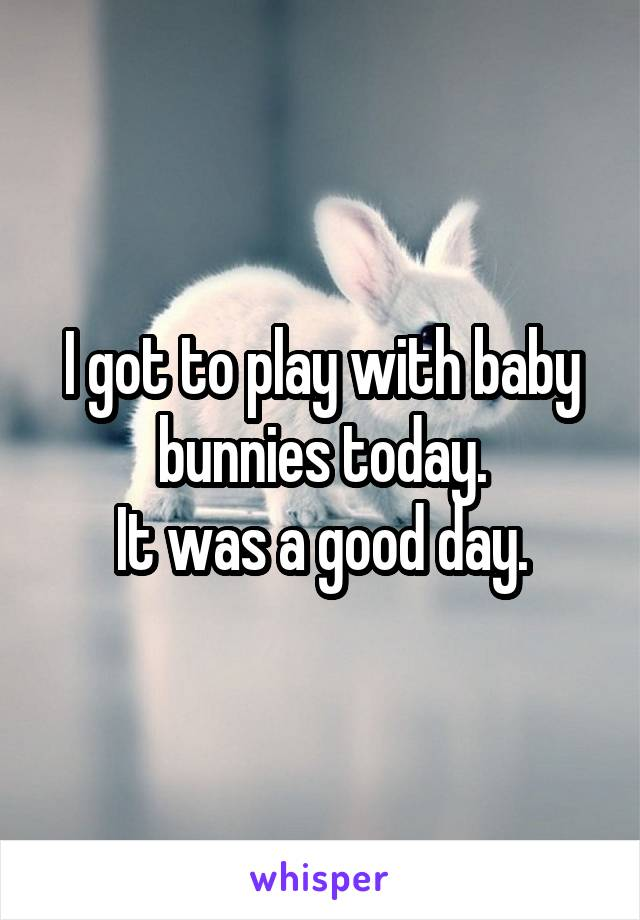 I got to play with baby bunnies today. It was a good day.