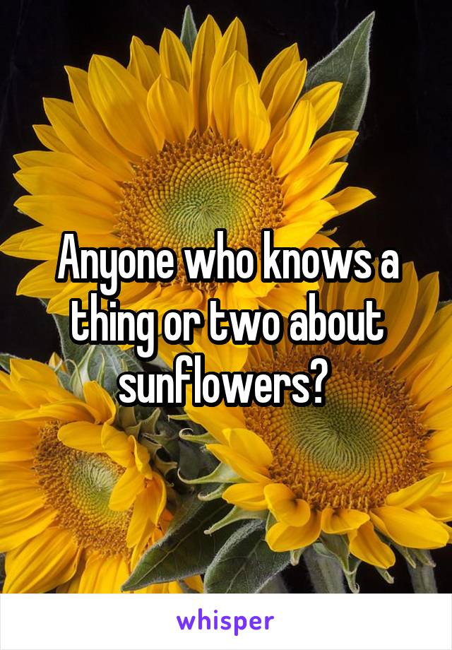 Anyone who knows a thing or two about sunflowers?