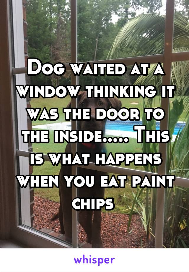 Dog waited at a window thinking it was the door to the inside..... This is what happens when you eat paint chips