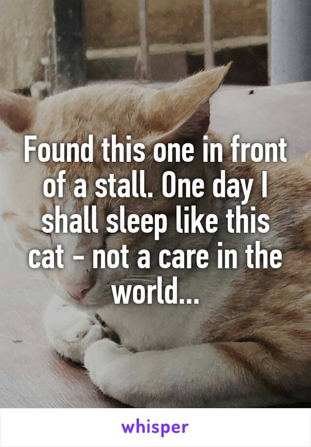 Found this one in front of a stall. One day I shall sleep like this cat - not a care in the world...