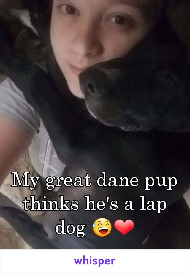 My great dane pup thinks he's a lap dog 😅❤