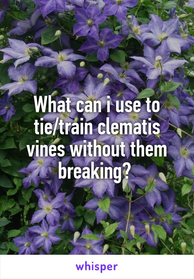 What can i use to tie/train clematis vines without them breaking?