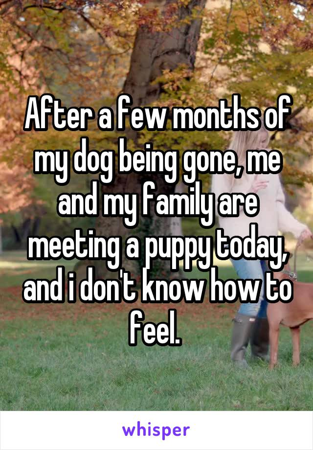 After a few months of my dog being gone, me and my family are meeting a puppy today, and i don't know how to feel.