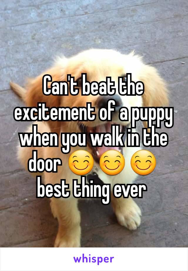 Can't beat the excitement of a puppy when you walk in the door 😊😊😊 best thing ever