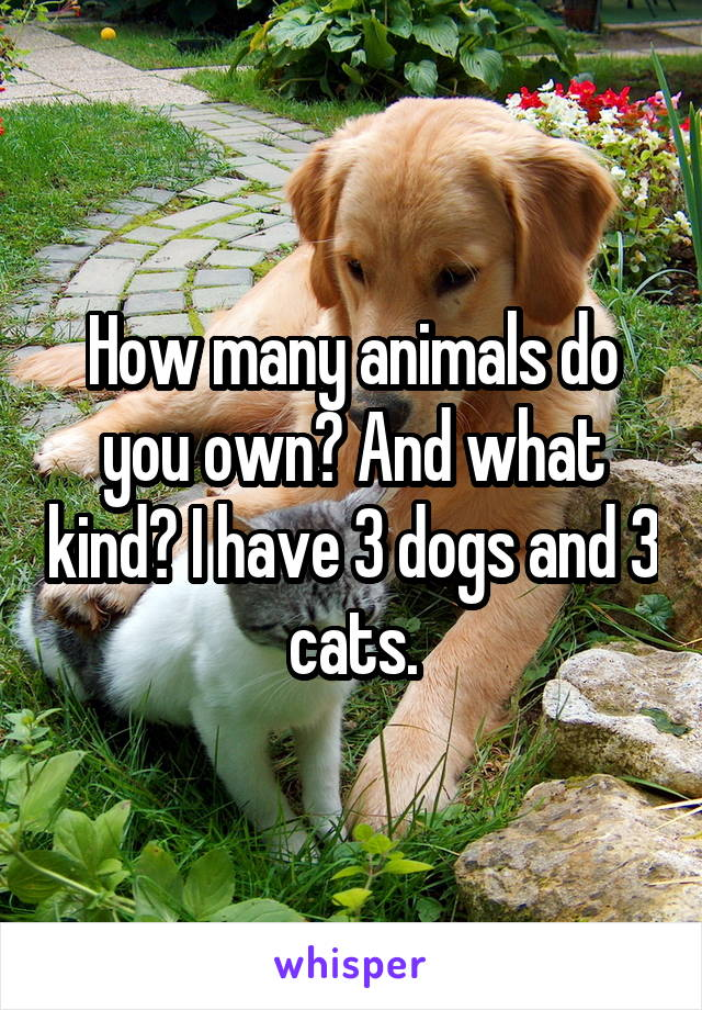 How many animals do you own? And what kind? I have 3 dogs and 3 cats.