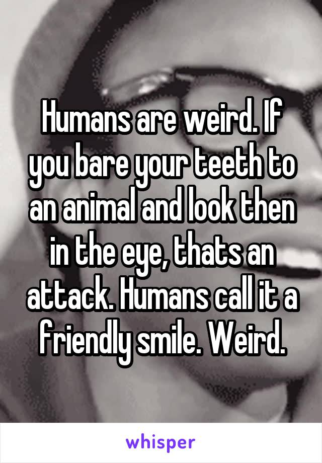Humans are weird. If you bare your teeth to an animal and look then in the eye, thats an attack. Humans call it a friendly smile. Weird.