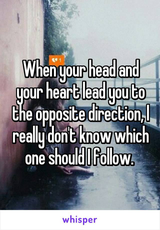 When your head and your heart lead you to the opposite direction, I really don't know which one should I follow.