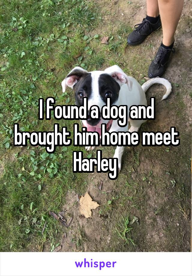 I found a dog and brought him home meet Harley