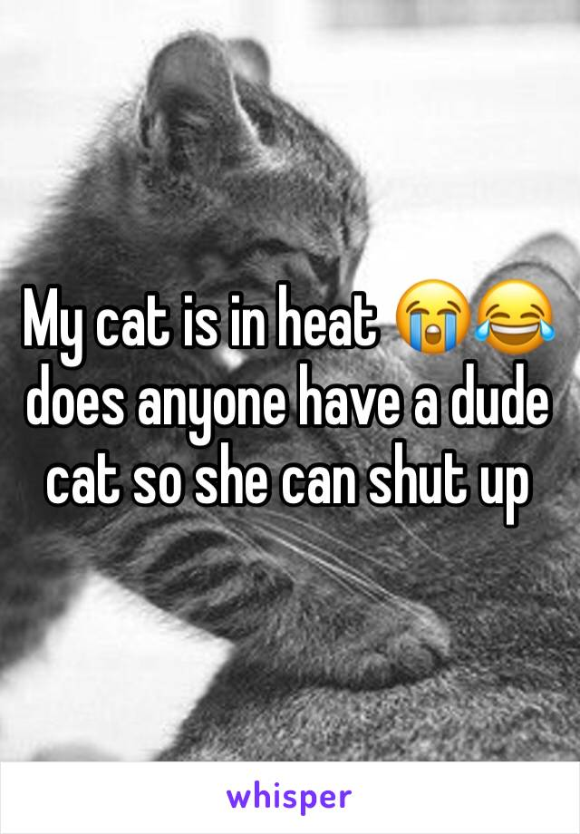 My cat is in heat 😭😂does anyone have a dude cat so she can shut up