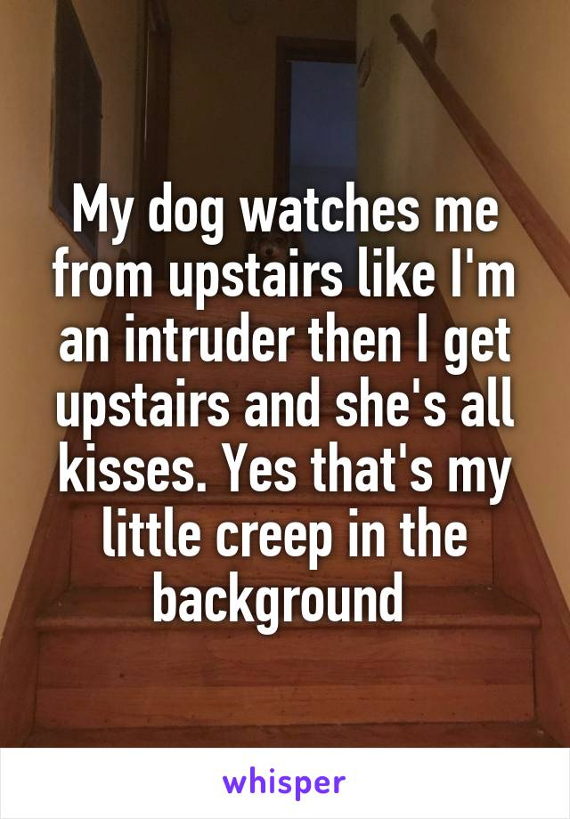 My dog watches me from upstairs like I'm an intruder then I get upstairs and she's all kisses. Yes that's my little creep in the background