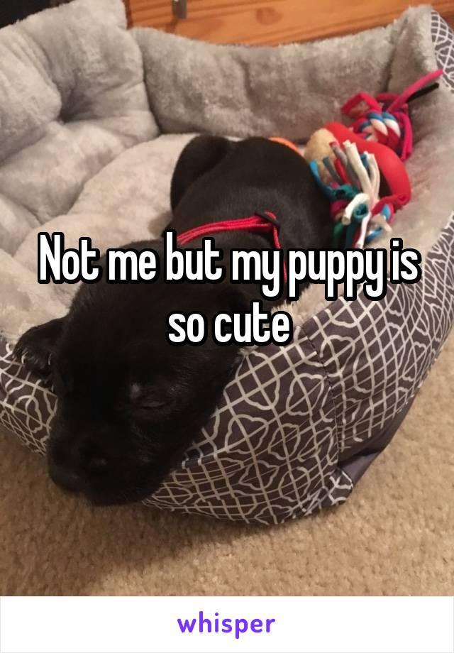 Not me but my puppy is so cute