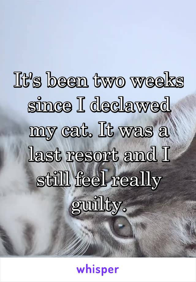 It's been two weeks since I declawed my cat. It was a last resort and I still feel really guilty.