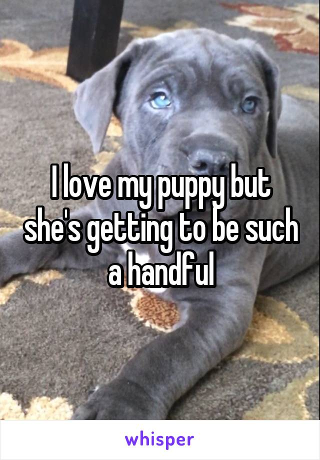 I love my puppy but she's getting to be such a handful