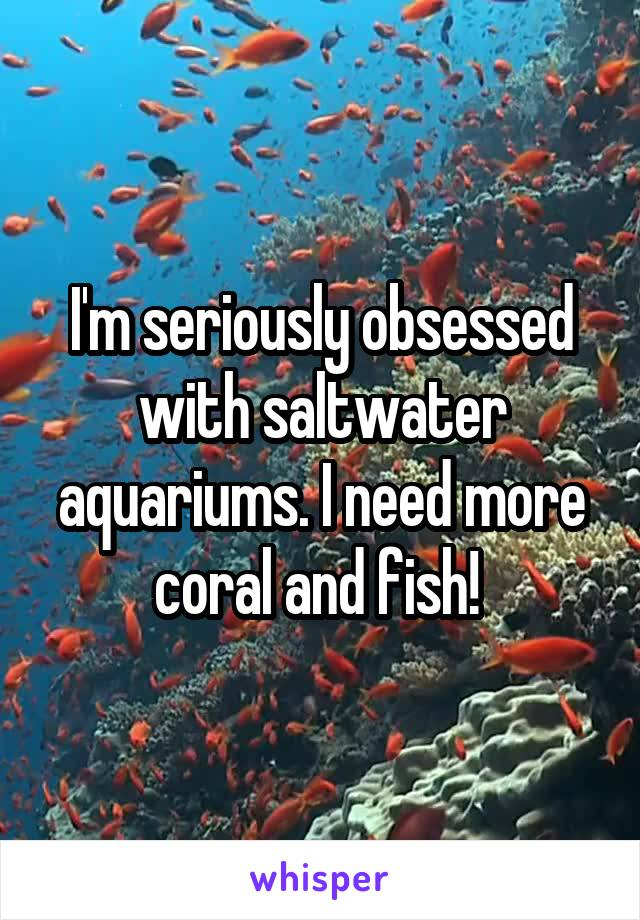 I'm seriously obsessed with saltwater aquariums. I need more coral and fish!