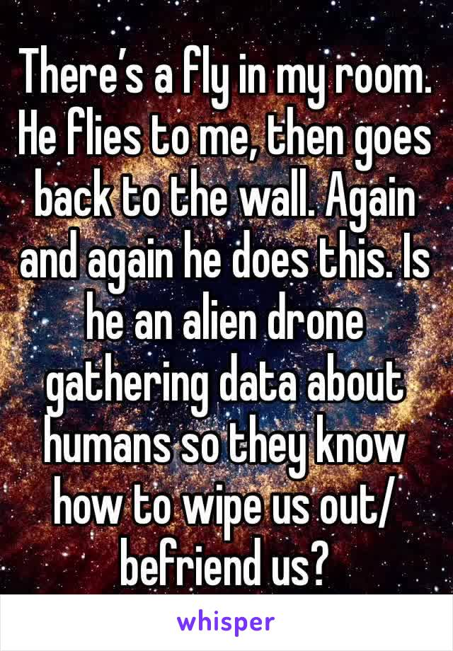 There's a fly in my room.  He flies to me, then goes back to the wall. Again and again he does this. Is he an alien drone gathering data about humans so they know how to wipe us out/befriend us?