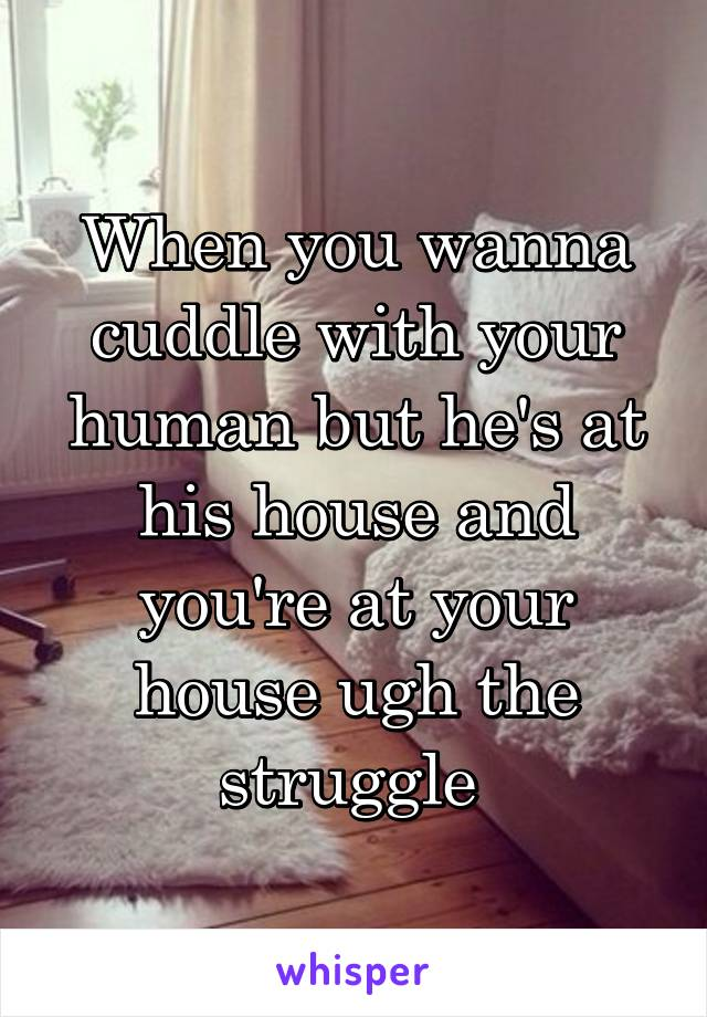 When you wanna cuddle with your human but he's at his house and you're at your house ugh the struggle
