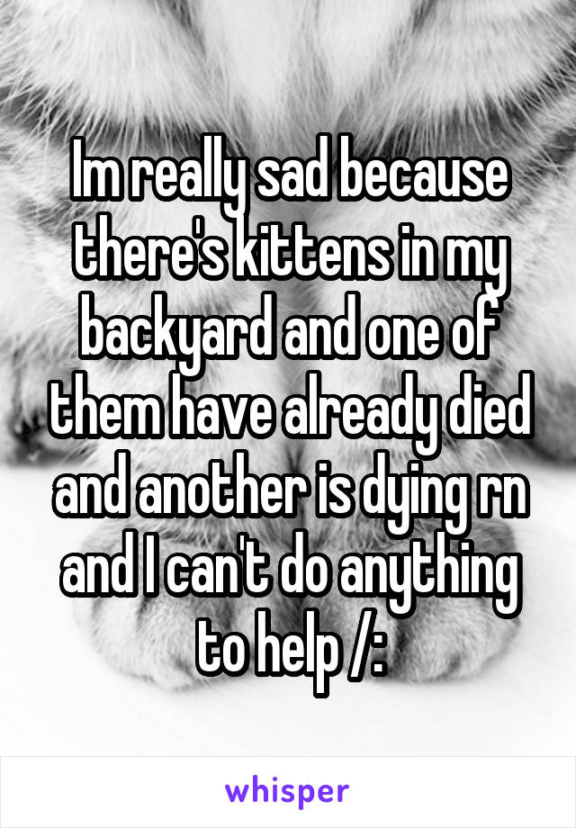 Im really sad because there's kittens in my backyard and one of them have already died and another is dying rn and I can't do anything to help /: