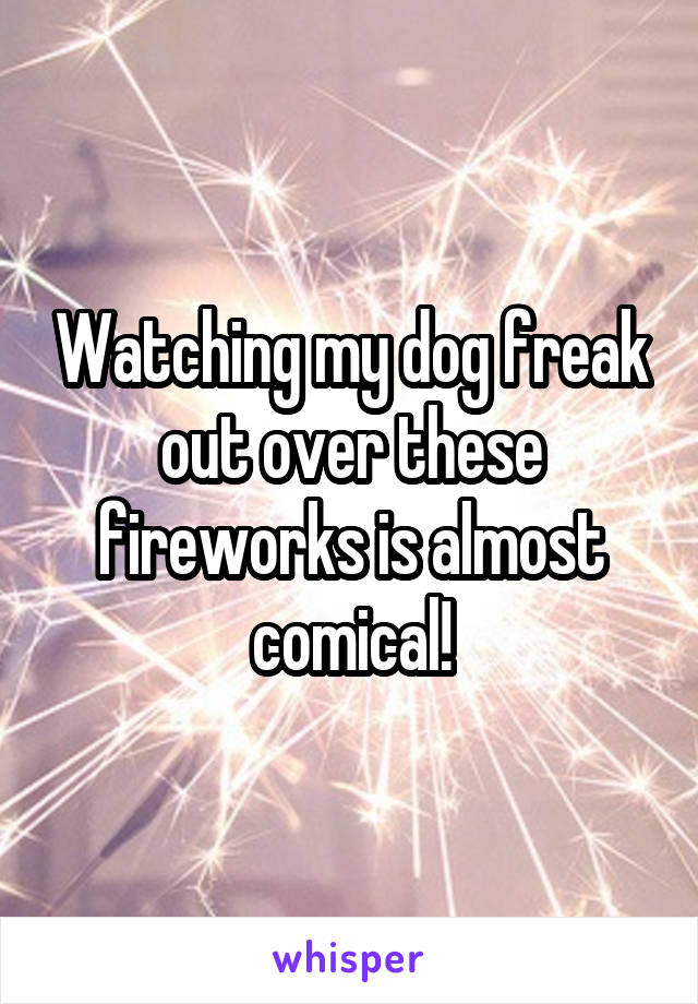 Watching my dog freak out over these fireworks is almost comical!