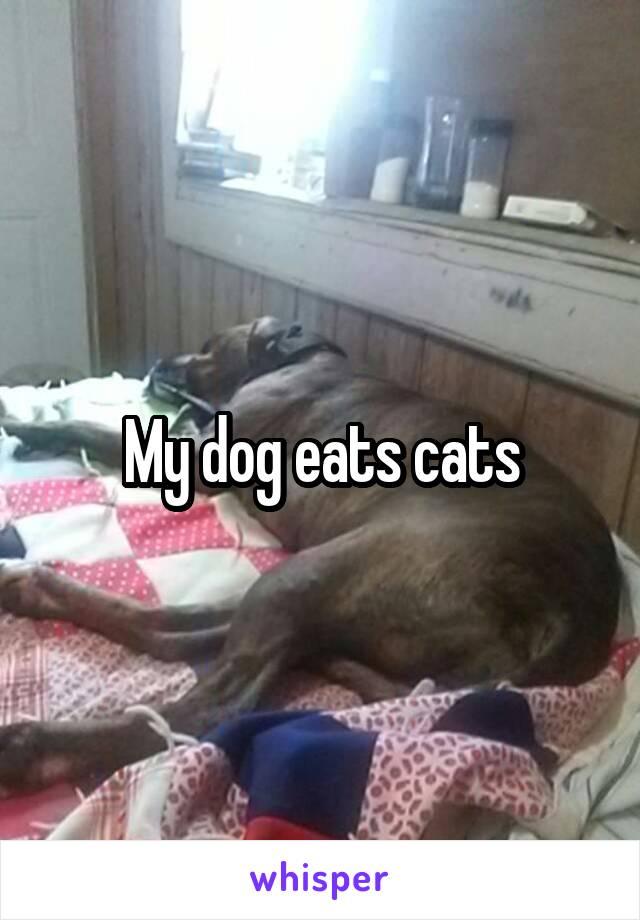 My dog eats cats