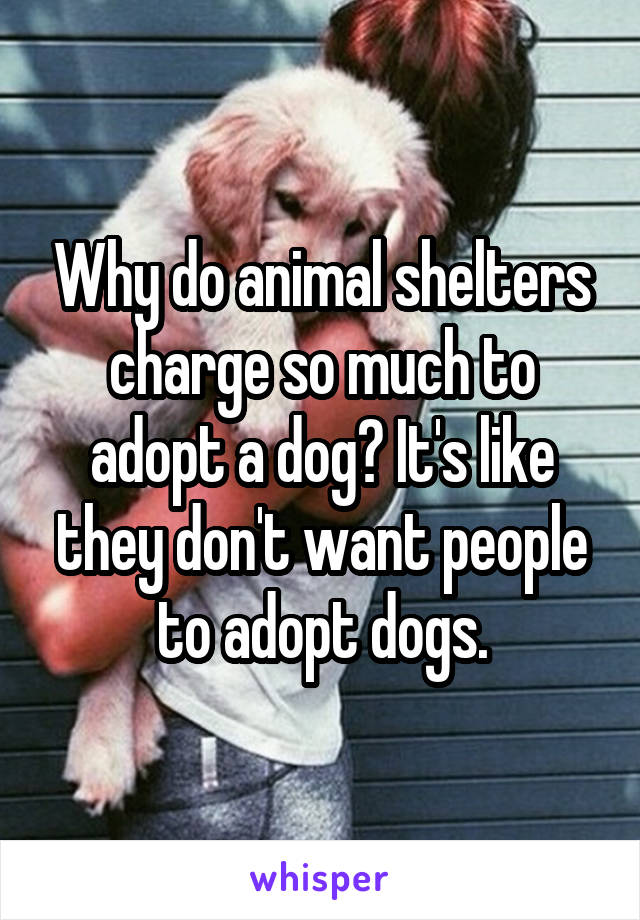 Why do animal shelters charge so much to adopt a dog? It's like they don't want people to adopt dogs.