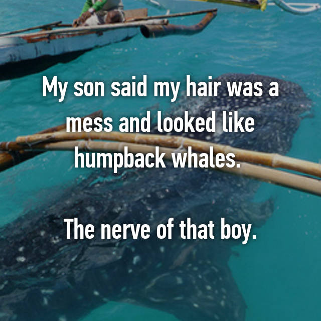 My son said my hair was a mess and looked like humpback whales.   The nerve of that boy.