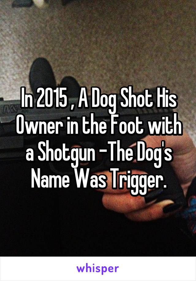 In 2015 , A Dog Shot His Owner in the Foot with a Shotgun -The Dog's Name Was Trigger.