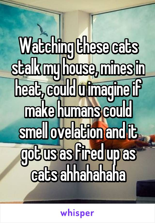 Watching these cats stalk my house, mines in heat, could u imagine if make humans could smell ovelation and it got us as fired up as cats ahhahahaha