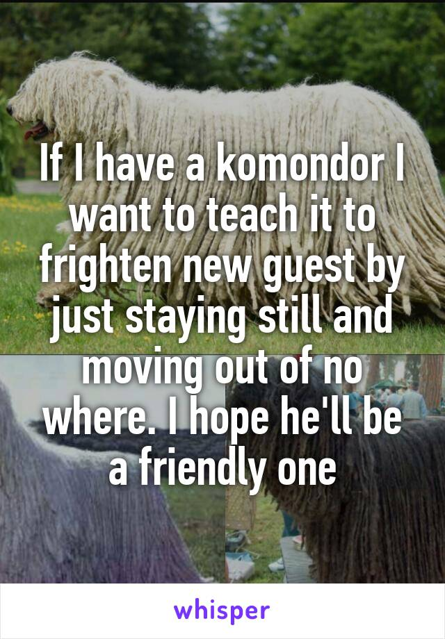 If I have a komondor I want to teach it to frighten new guest by just staying still and moving out of no where. I hope he'll be a friendly one