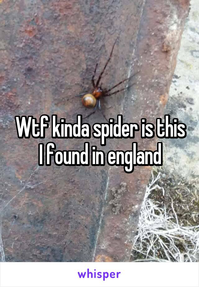 Wtf kinda spider is this I found in england