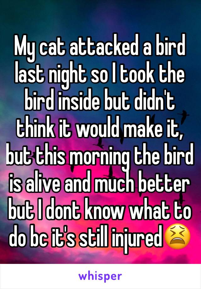 My cat attacked a bird last night so I took the bird inside but didn't think it would make it, but this morning the bird is alive and much better but I dont know what to do bc it's still injured😫