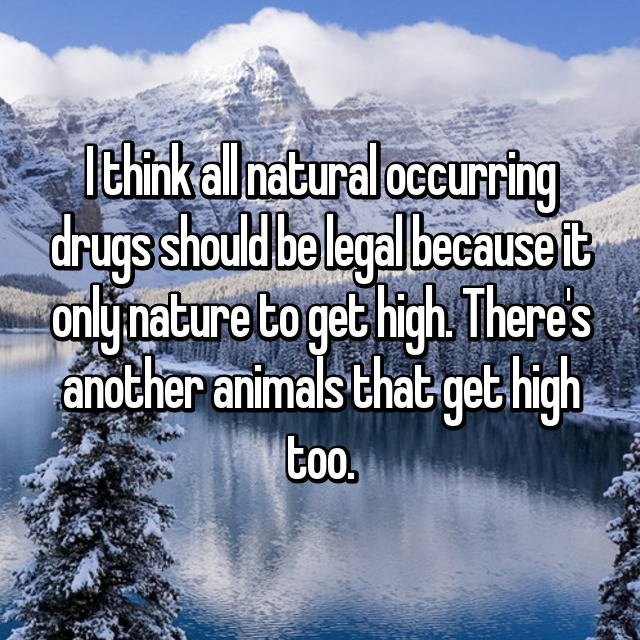 I think all natural occurring drugs should be legal because it only nature to get high. There's another animals that get high too.