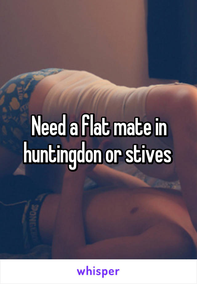 Need a flat mate in huntingdon or stives