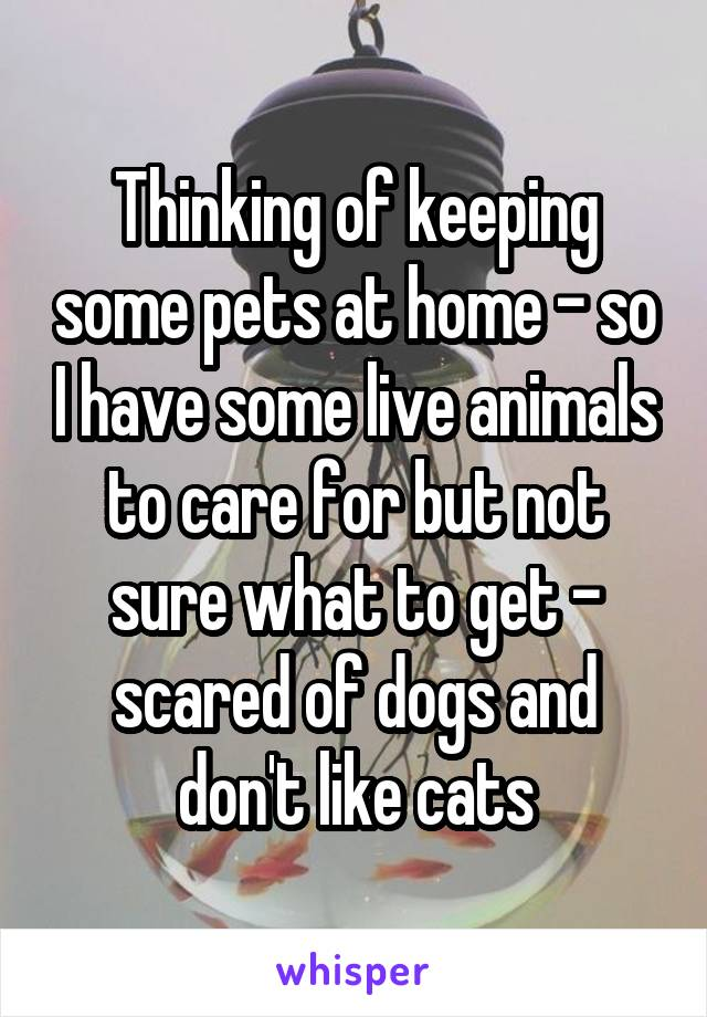 Thinking of keeping some pets at home - so I have some live animals to care for but not sure what to get - scared of dogs and don't like cats