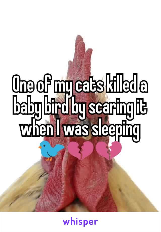 One of my cats killed a baby bird by scaring it when I was sleeping 🐦💔💔