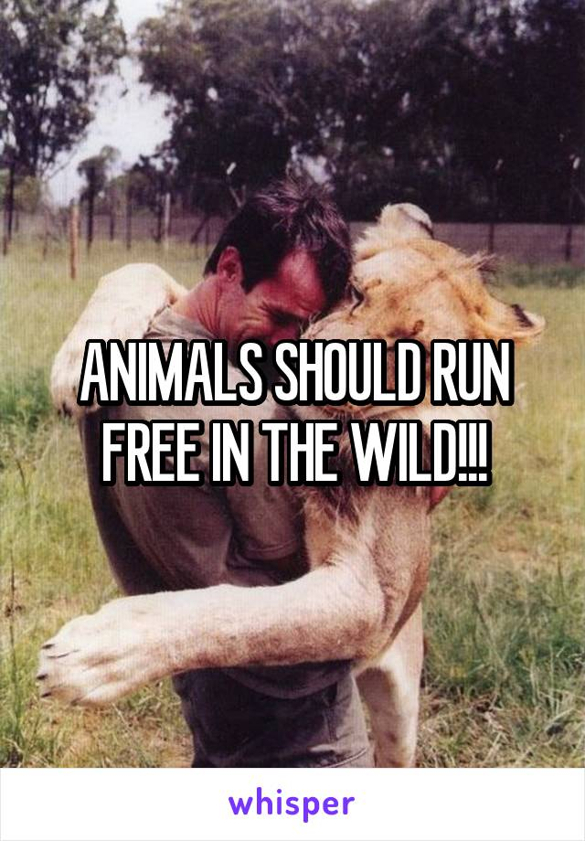 ANIMALS SHOULD RUN FREE IN THE WILD!!!