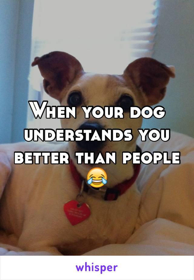When your dog understands you better than people 😂
