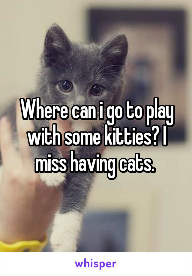Where can i go to play with some kitties? I miss having cats.