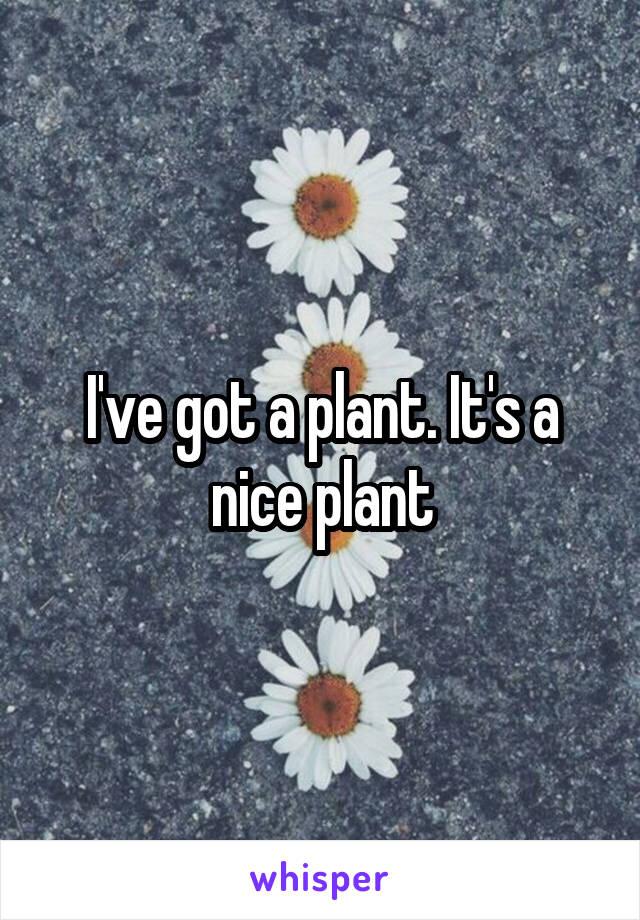 I've got a plant. It's a nice plant