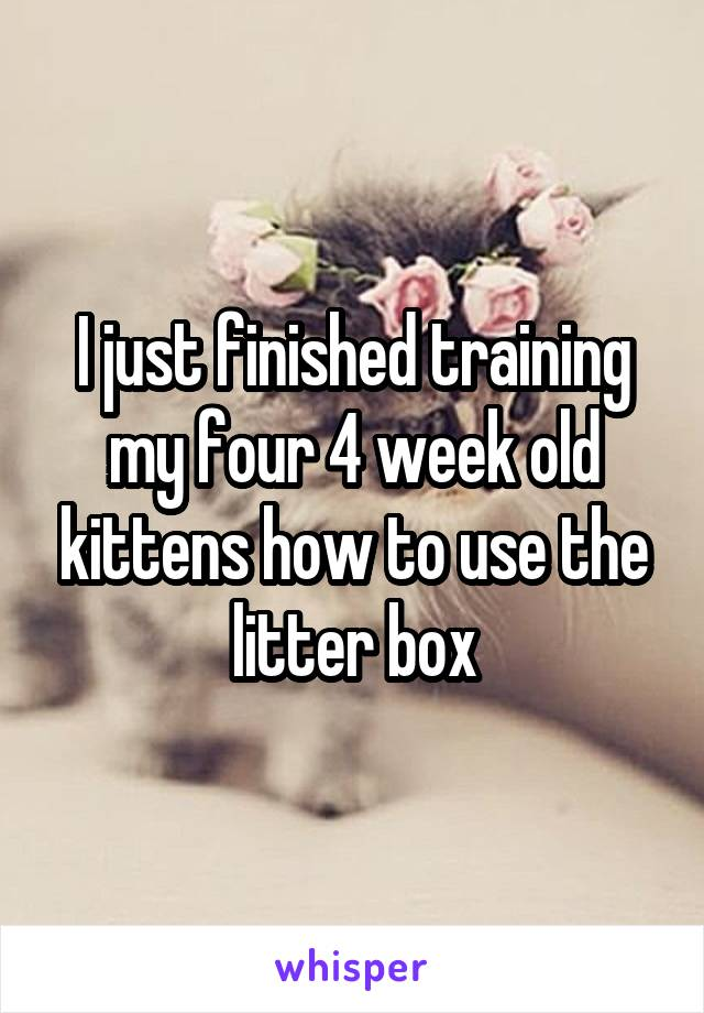 I just finished training my four 4 week old kittens how to use the litter box