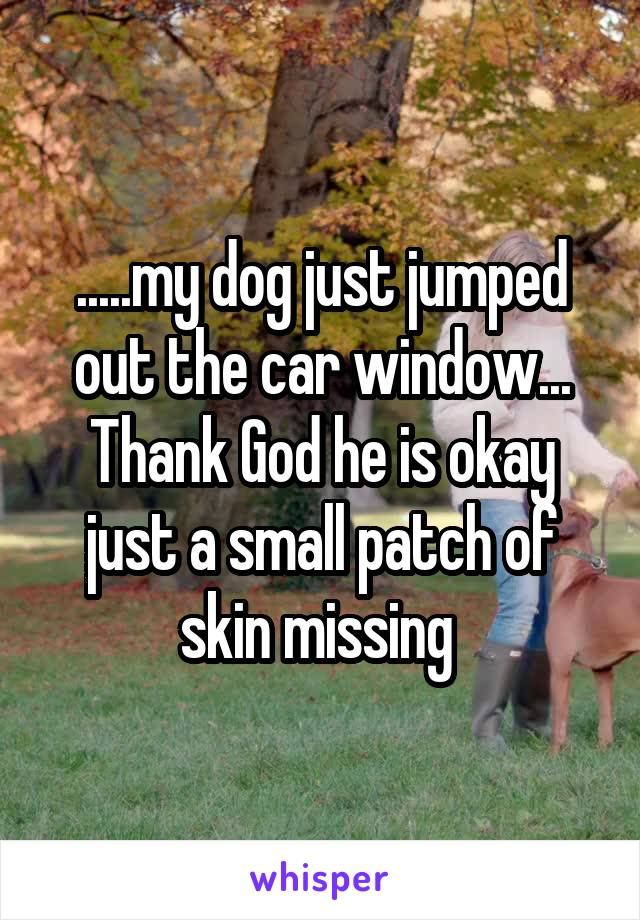 .....my dog just jumped out the car window... Thank God he is okay just a small patch of skin missing