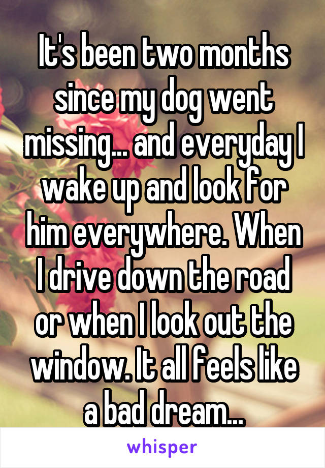 It's been two months since my dog went missing... and everyday I wake up and look for him everywhere. When I drive down the road or when I look out the window. It all feels like a bad dream...