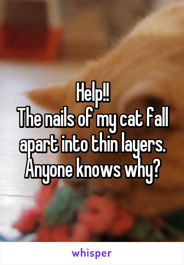 Help!! The nails of my cat fall apart into thin layers. Anyone knows why?