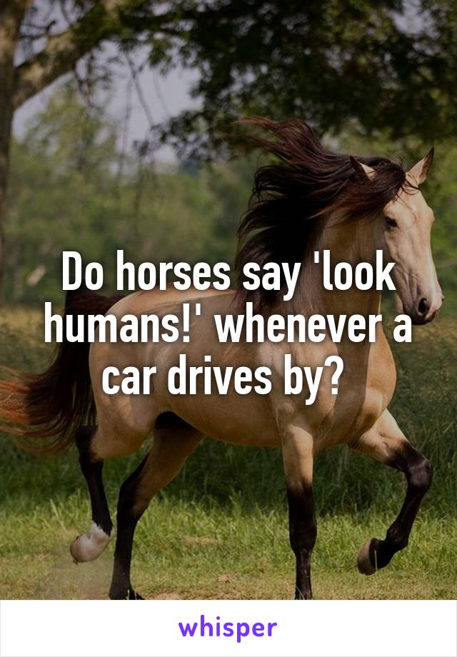 Do horses say 'look humans!' whenever a car drives by?