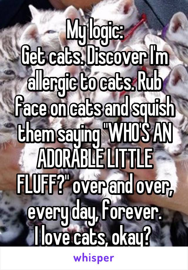"""My logic: Get cats. Discover I'm allergic to cats. Rub face on cats and squish them saying """"WHO'S AN ADORABLE LITTLE FLUFF?"""" over and over, every day, forever. I love cats, okay?"""