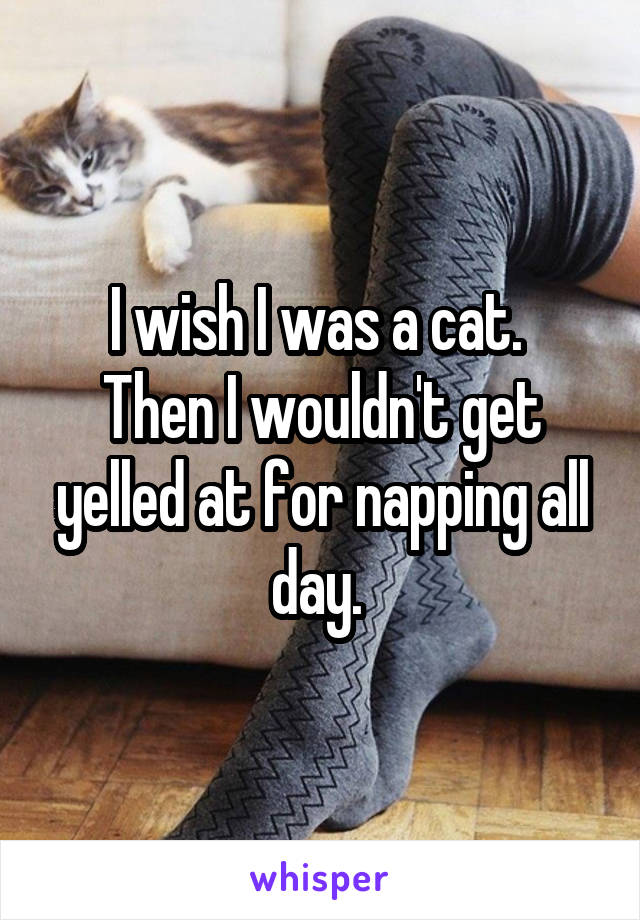 I wish I was a cat.  Then I wouldn't get yelled at for napping all day.