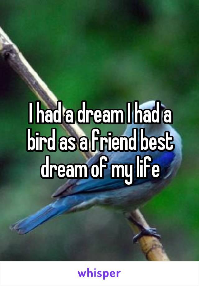 I had a dream I had a bird as a friend best dream of my life
