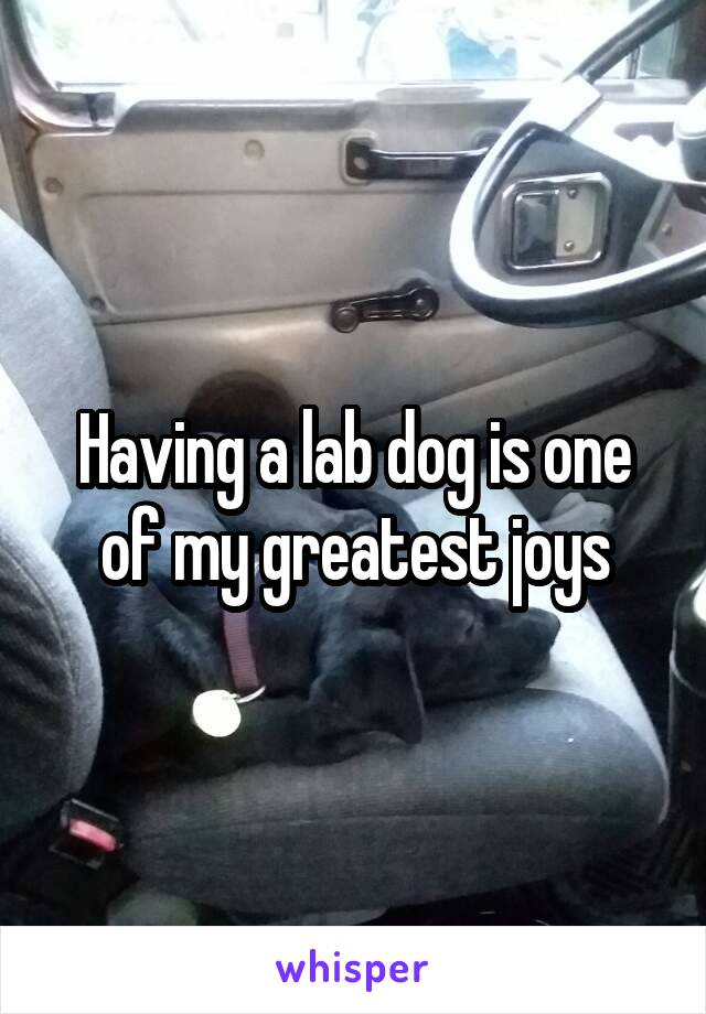 Having a lab dog is one of my greatest joys